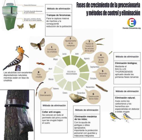 Ciclo de vida de la procesionaria y métodos de control y eliminación.