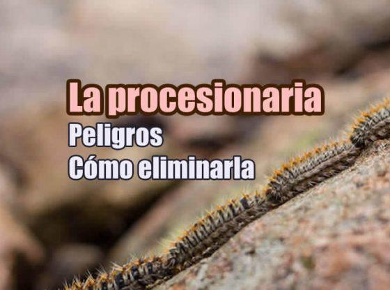 La procesionaria, como eliminarla, peligros, ciclo de vida