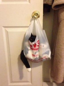 gatito gracioso bolsa
