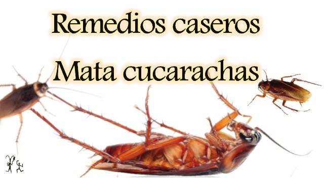 Como eliminar las cucarachas en casa - Eliminar insectos en casa ...
