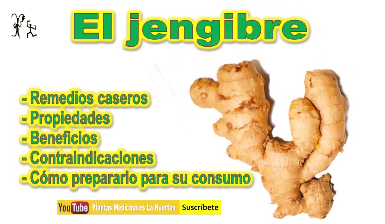 jengibre para adelgazar jengibre para perder peso para que sirve el jengibre
