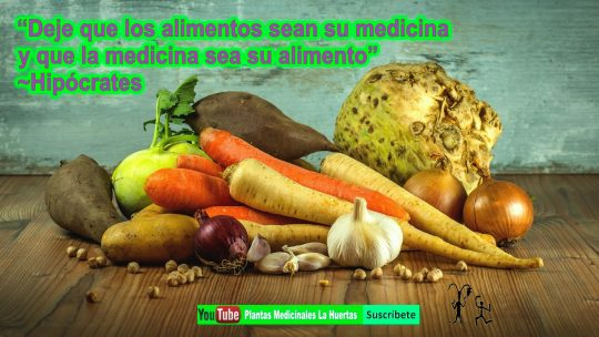 El ajo para gripe y hongos remedios naturales.  plantas medicinales la huertas