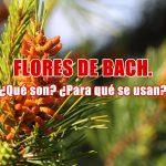 Flores de Bach. ¿Qué son?¿Para qué se usan?