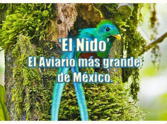 quetzal en el nido aviario mexico