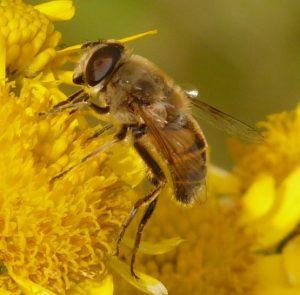 abeja, apicultura y miel. todo sobre las abejas