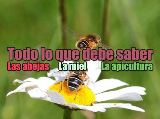 abeja, miel, apicultura