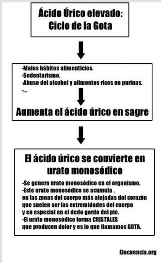 ciclo purinas, ácido úrico, urato monosódico y gota