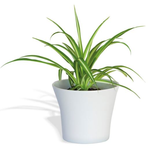 cinta plantas que purifican el aire