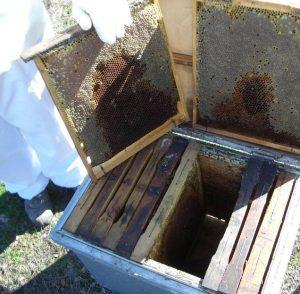 extracción de cuadros de colmena layens