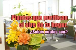 plantas purificadoras del aire de tu hogar