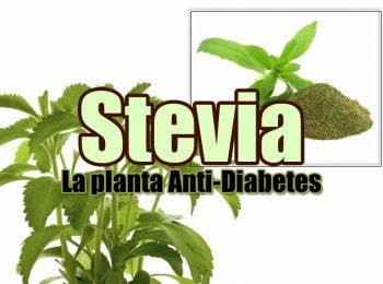 stevia PORTADA 2