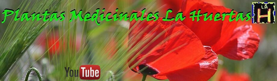 remedios caseros plantas medicinales la huetas
