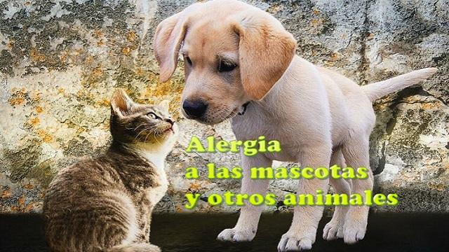 alergia a mascotas animales
