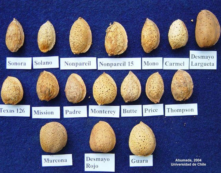 variedades de almendras