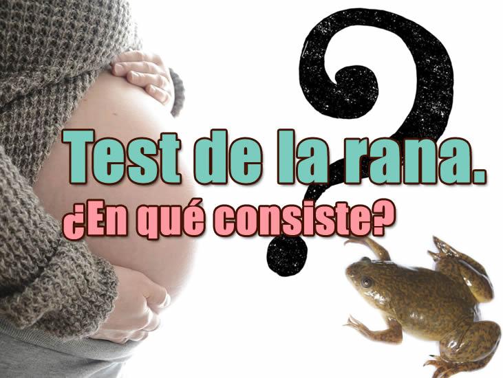 en que consiste la prueba de la rana prueba de embarazo casera