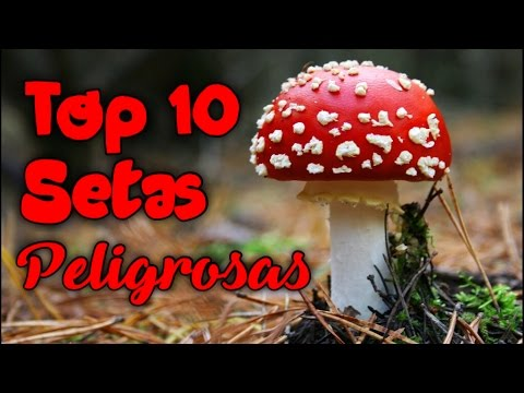 Top 10 hongos o Setas más peligrosas del mundo.
