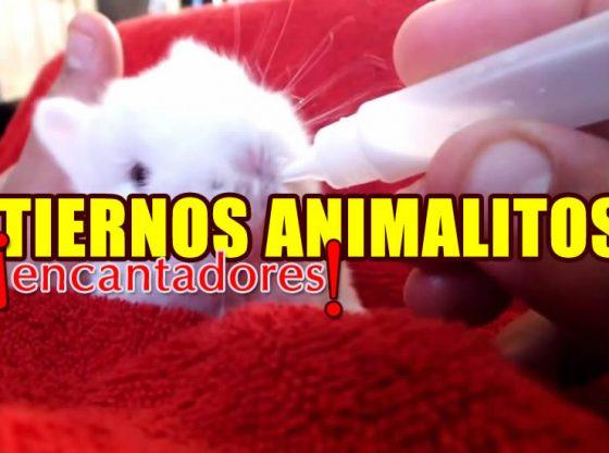 videos tiernos de animales