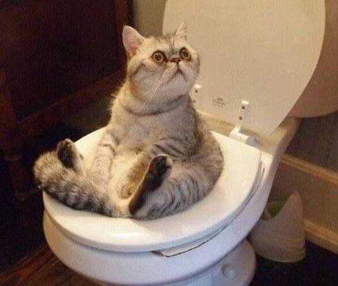 Comenzar el día con una sonrisa gato inodoro