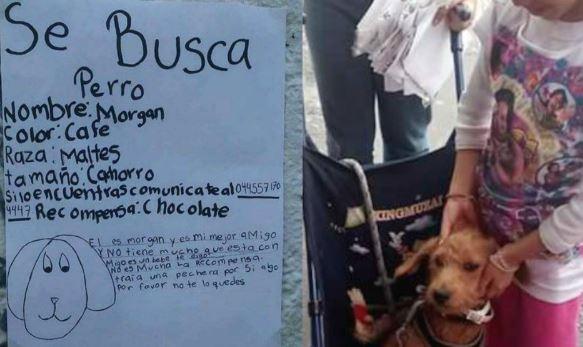 cartel niña para recuperar a su perro perdido