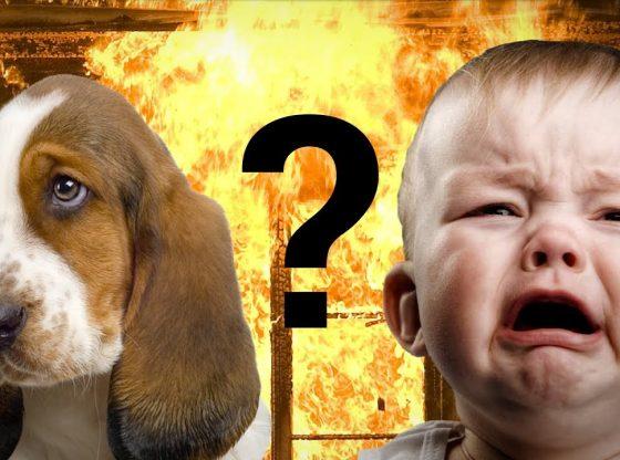 a quién salvaría antes, a su cachorrito o a un bebé desconocido