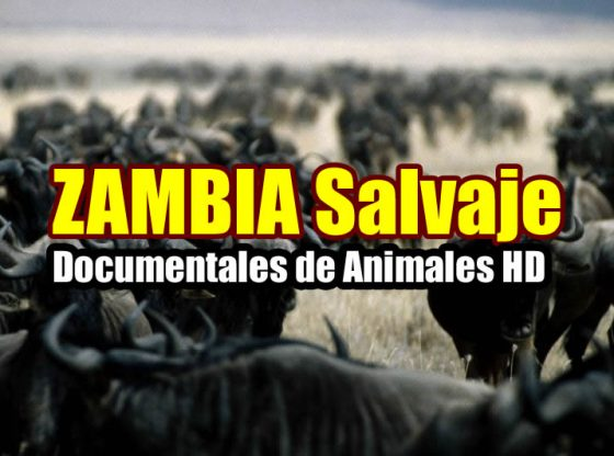 documentales de animales salvajes Zambia salvaje