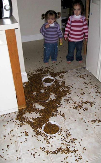 travesuras de niños quien dio de comer al perro