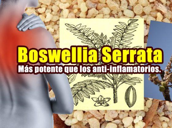 BOSWELLIA SERRATA 4