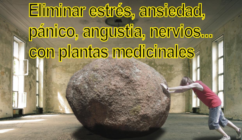 estres y ansiedad plantas medicinales