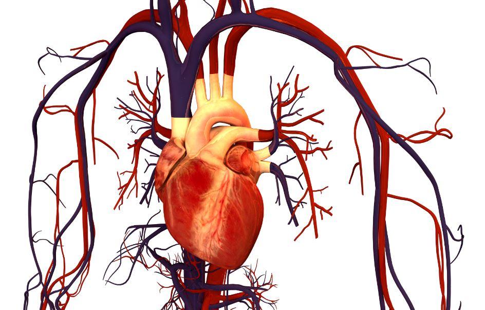 Mejora la salud del corazón con chocolate.