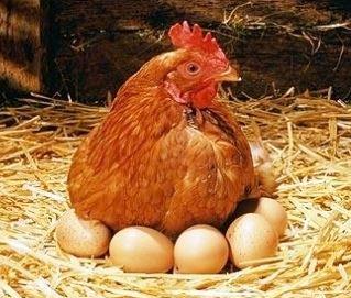 alimentos para bebés y niños Huevos Ecológicos