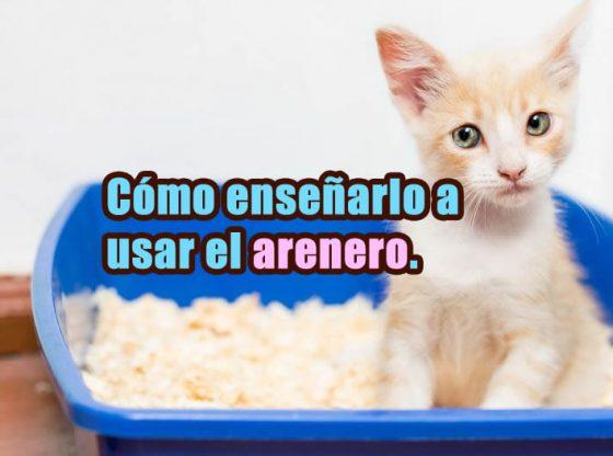 enseñar a un gato a usar un arenero portada