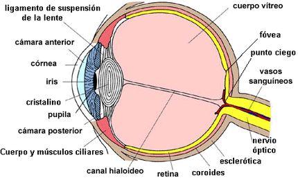salud de los ojos Partes del ojo