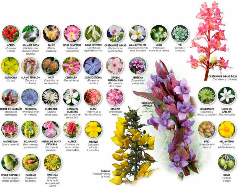 medicinas complementarias flores de bach