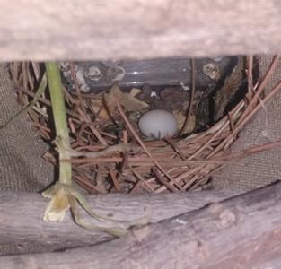 11 nidos de pajaros