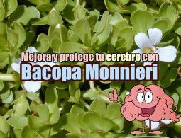Bacopa Monnieri portada