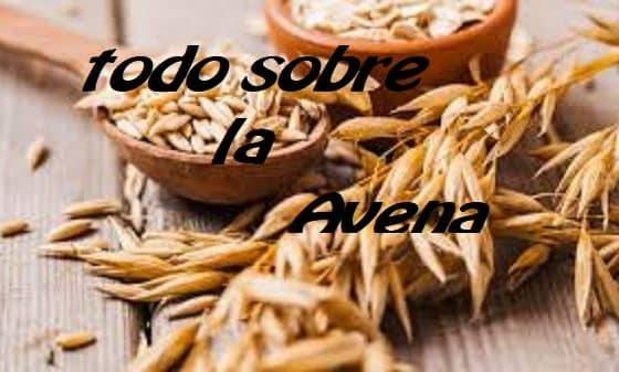 Avena