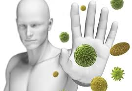Las lentejas fortalecen el sistema inmune