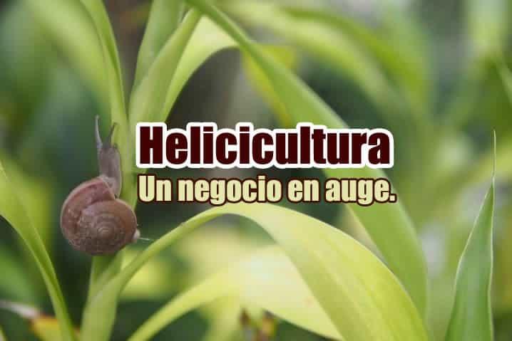 helicicultura portada 2