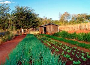 que es la permacultura 2