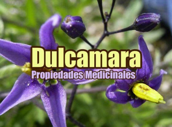 Dulcamara planta propiedades medicinales