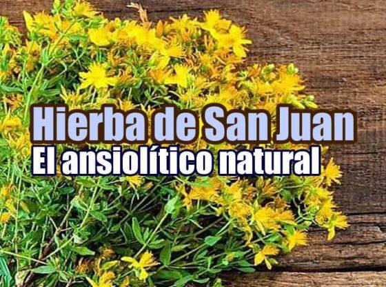 hierba de san juan ansiolitico natural