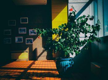 Consejos y cuidados de las plantas de interior