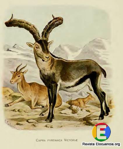 libro gratis mamíferos de la fauna ibérica - Capra pyrenaica Victorice Cabrera