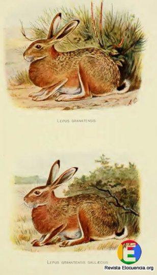 libro gratis mamíferos de la fauna ibérica - lepus granatensis