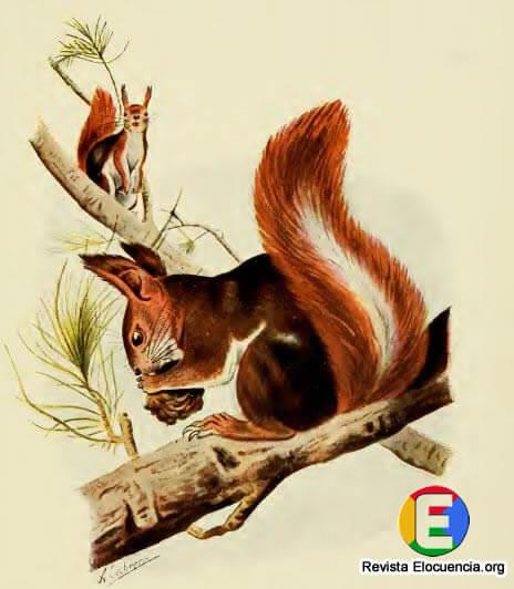 Libro gratis mamíferos de la fauna ibérica