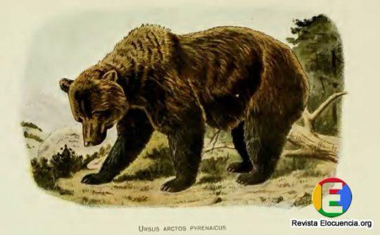 libro gratis mamíferos de la fauna ibérica - ursus-arctos-pyrenaicus fischer