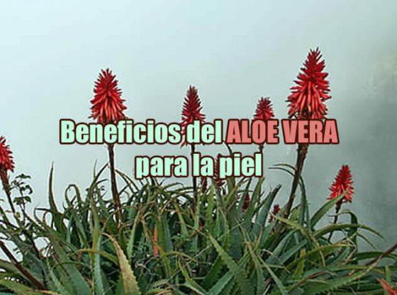 Beneficios del Aloe Vera o Sábila para la piel