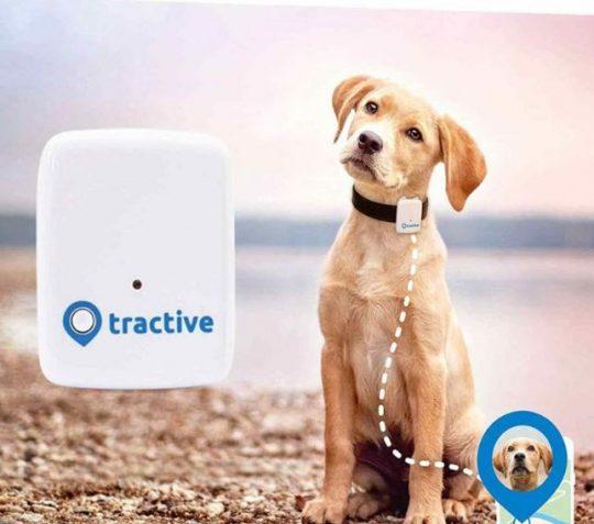 Amazon Black Friday localizador GPS perros
